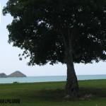 El árbol de Neem